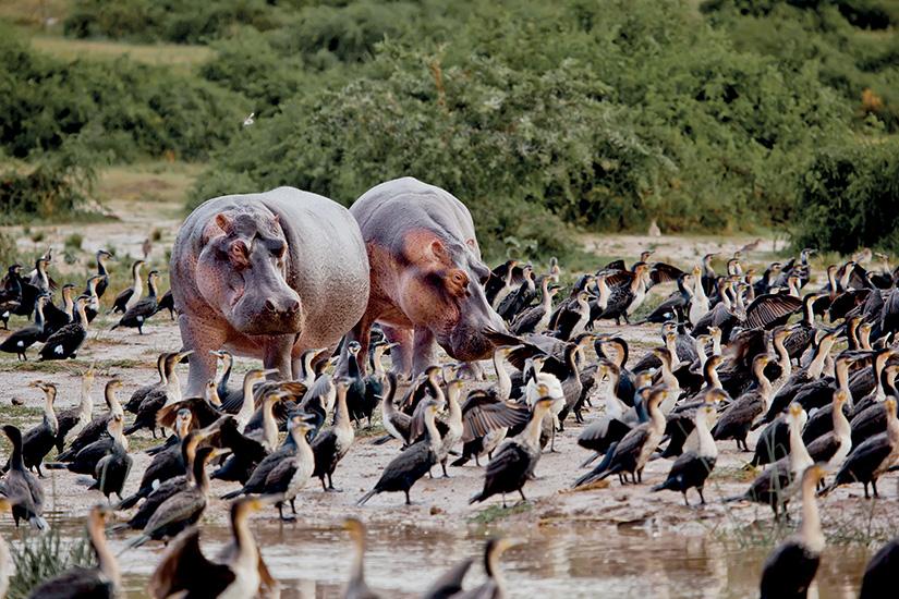 (image) image cote ivoire lac hippopotame 02 as_78658187