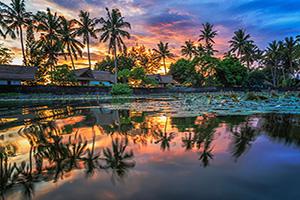 indonesie bali palmiers  it