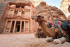 jordanie camel en face de la tresorerie al khazna  fo