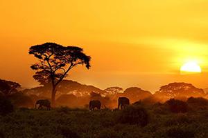 kenya parcnational amboseli elephant  it