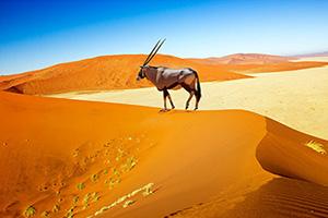 Circuit Aventure Namibienne