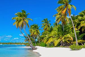 (vignette) Vignette Plage Caraibes sable blanc palmiers  it