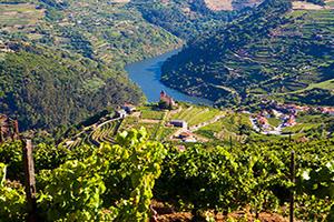 portugal vallee douro vignoble  it