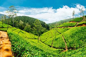 sri lanka nuwara eliya plantations the  it