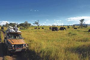 tanzanie serengeti spectateurs regarder elephants  it