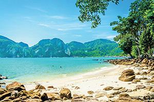 usa bahamas plage fabuleux avec des plantes  it