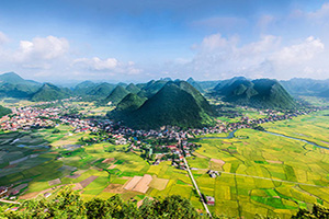 vietnam champ riz  it