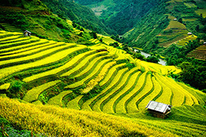 vietnam mu cang chai champs riz terrasses  it