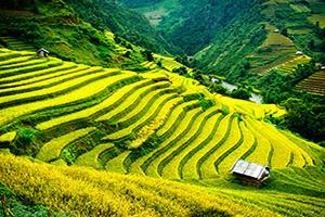 vietnam mu cang chai champs riz terrasses  it