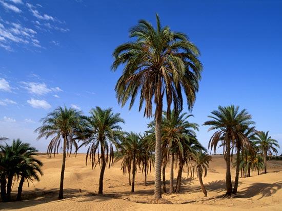 Circuit tunisie havas voyages circuit tunisie partir for Sejour complet tunisie