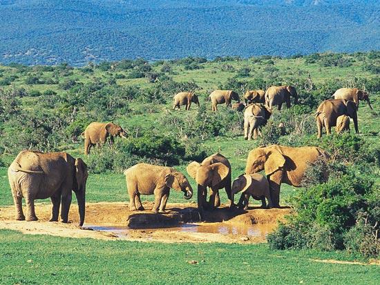 voyage afrique du sud elephant
