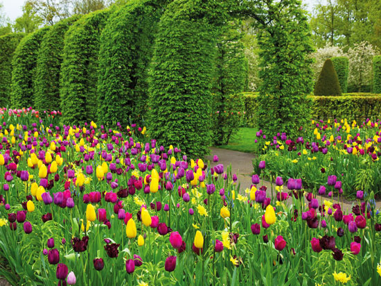 NT hollande keukenhof parc floral fotolia