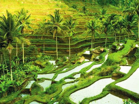 NT indonesie java cultures en terasse fotolia