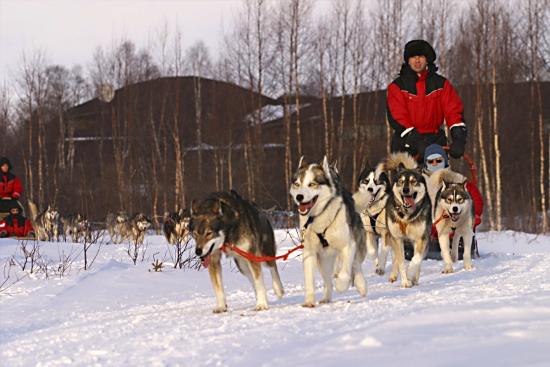 (Image) finlande 2012 laponie