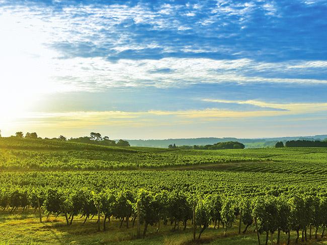 france bourgogne paysage vignes  fotolia