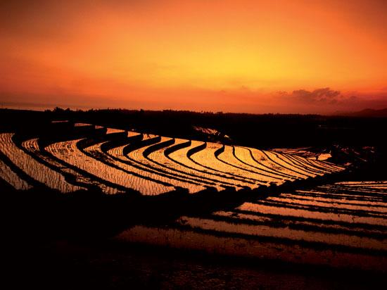 (Image) indonesie bali riziere