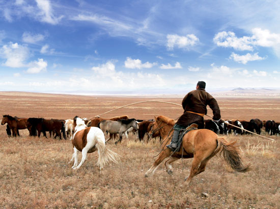 (Image) mongolie steppes