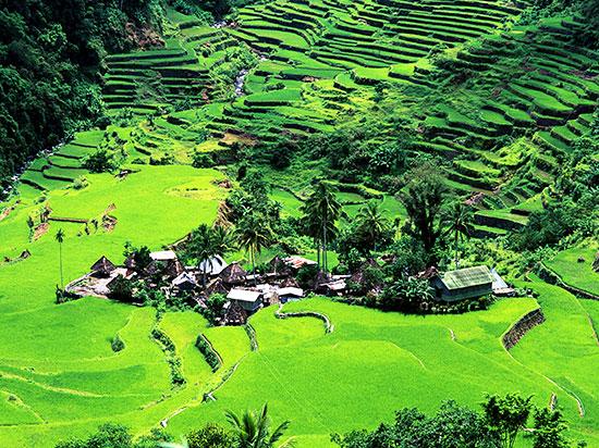 philippines riziere