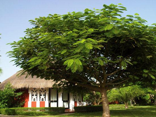 (Image) senegal hotel royam saly