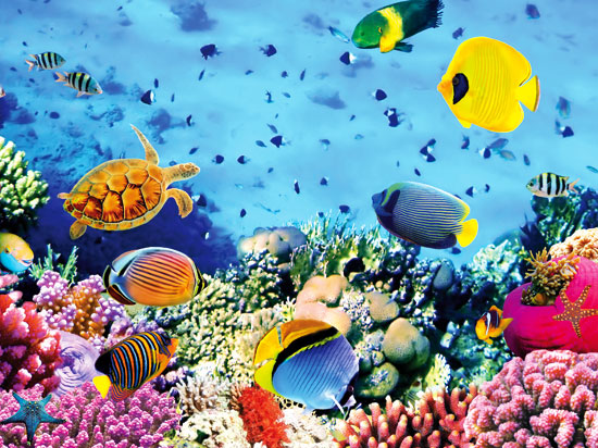 seychelles fond marin  fotolia